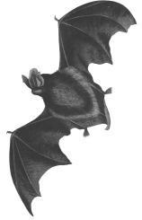bat-874288_1920