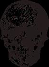 skull-1650654_1920.png