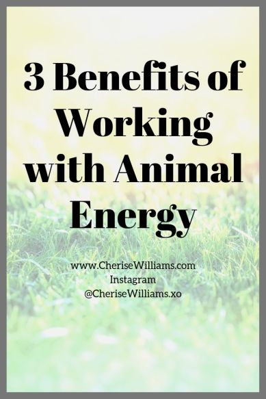 3 Benefits of Working with Animal Energy